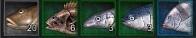 asta online sangkyung fish list